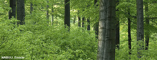 Naturverjüngung im Wald