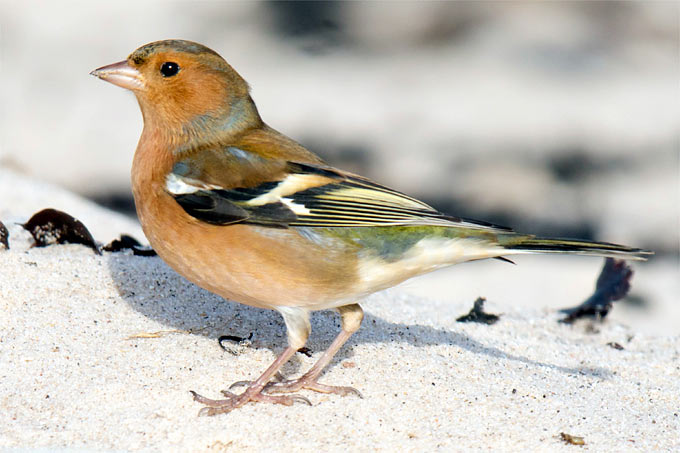 Stunde Der Wintervogel Nabu Niedersachsen