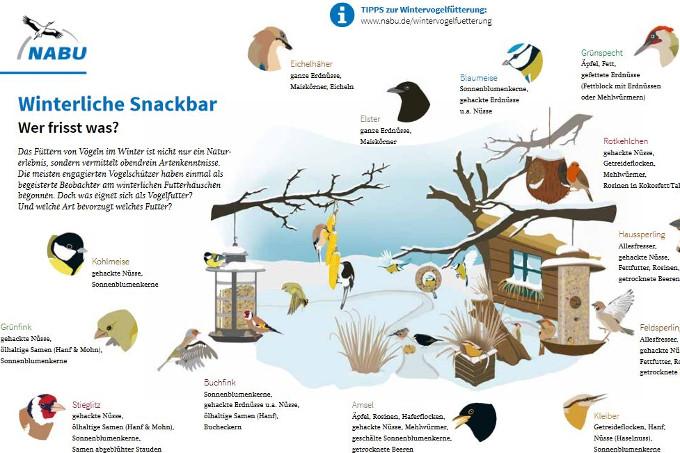 Zum Vergrößern<a href=https://www.nabu.de/imperia/md/content/nabude/vogelschutz/sdw/161213-nabu-wintervoegelschaubild-web.pdf> hier</a> klicken.