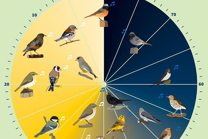Welcher Vogel Singt Um 4 Uhr Morgens